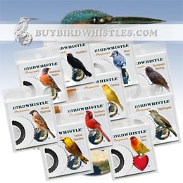 Bird Whistles | Special Editions